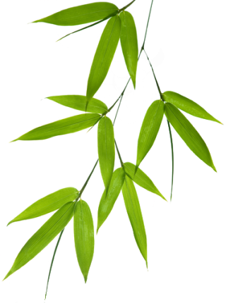 Bamboo Leaf Png PNG images