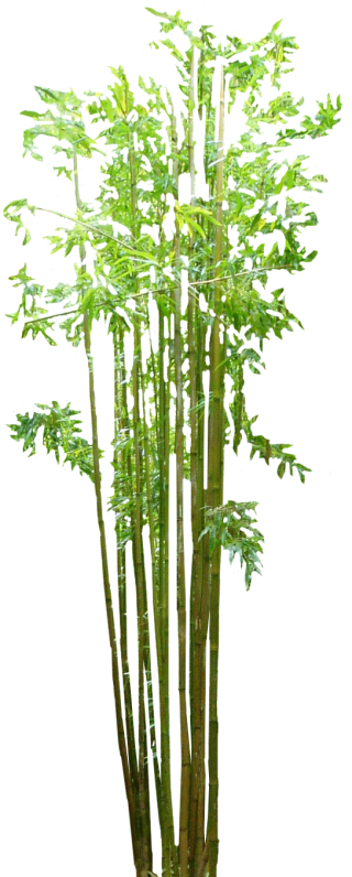 Free Download Bamboo Png Images PNG images