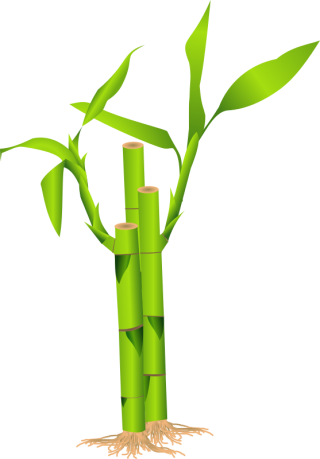 Download Icon Vectors Free Bamboo PNG images