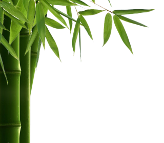 Download For Free Bamboo Png In High Resolution PNG images