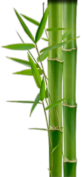 Free Download Images Bamboo PNG images