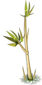 Bamboo PNG HD PNG images