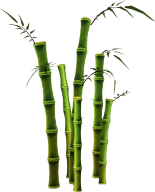 Bamboo File PNG PNG images