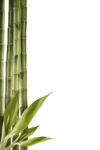 Download Images Bamboo Free PNG images