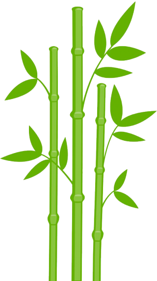 Bamboo Png Designs PNG images