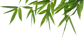 Clipart Bamboo Png Best PNG images