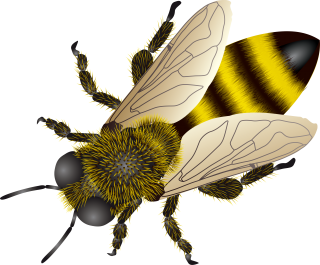 Bee Background Transparent PNG images