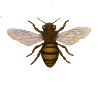 Download Bee Latest Version 2018 27 PNG images