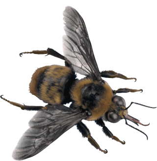Download Png Bee High-quality PNG images