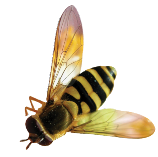 Download Vector Bee Png Free PNG images