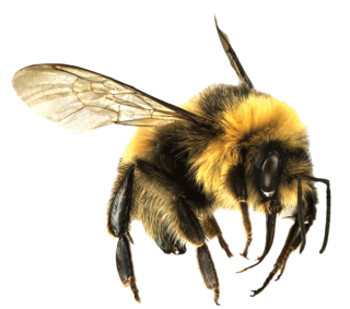 Free Download Of Bee Icon Clipart 12 PNG images