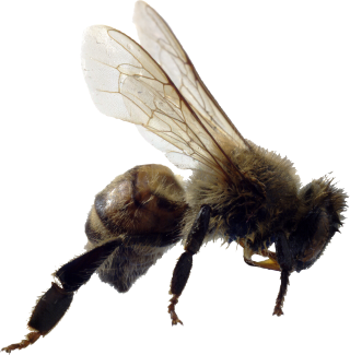 Free Download Of Bee Icon Clipart PNG images