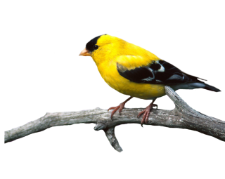 Browse And Download Birds Png Pictures PNG images