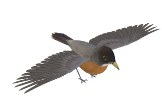 Birds Png Images PNG images