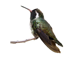 Flying Birds Png PNG images