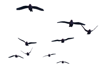 Flying Birds PNG Stock PNG images