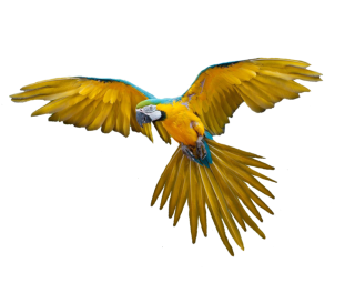 Png Bird PNG images