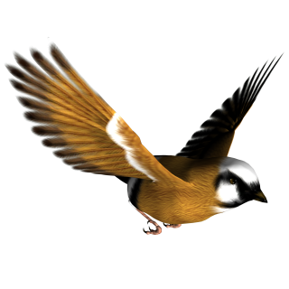 Png Image Bird PNG images