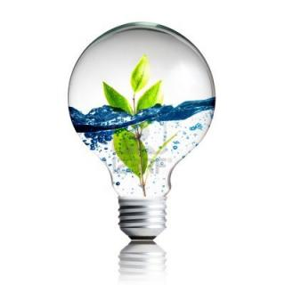 Plant And Water Inside Light Bulb PNG images