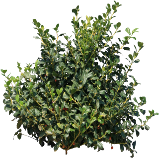 Bushes Tree Png PNG images