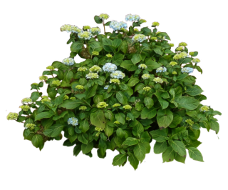Shrub, Bushes PNG PNG images