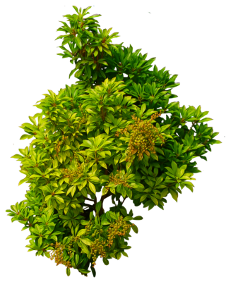 Shrub Bushes Png PNG images