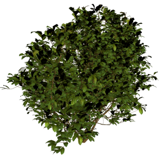 Tree Bushes Plants Png PNG images