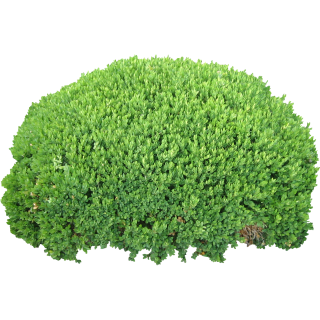 Bushes PNG HD PNG images