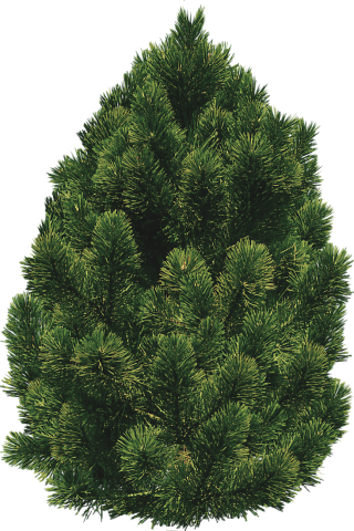 Pine Bush Trees PNG images