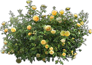 Rose Bush Icon Png PNG images