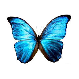 High Resolution Butterfly Png Icon PNG images
