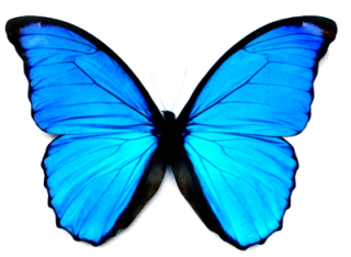 High-quality Butterfly Cliparts For Free! PNG images