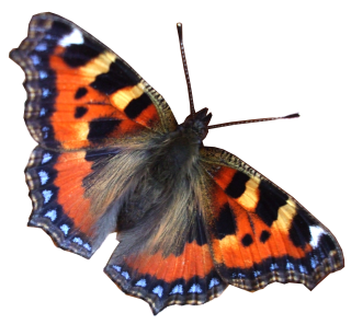 Download Free High-quality Butterfly Png Transparent Images PNG images