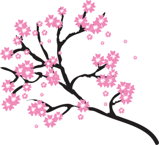 Cherry Blossom Photos PNG images