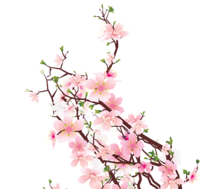 Cherry Blossom Transparent HD Background PNG images