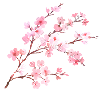 Download Cherry Blossom High-quality Png PNG images