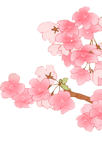 Free Cherry Blossom Vectors Download PNG images