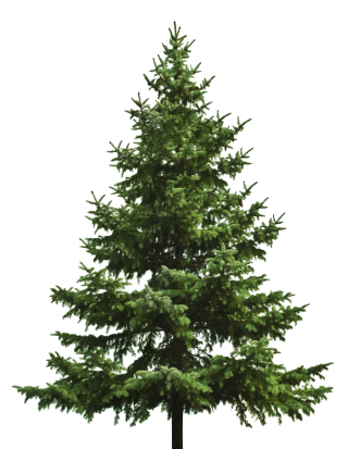 Free Download Of Christmas Tree Icon Clipart PNG images