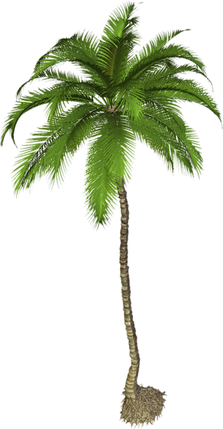 Best Coconut Tree Png Palm Clipart PNG images
