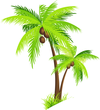 Coconut Tree Palm Photo Clipart PNG images