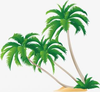 Coconut Tree Palm Transparent PNG PNG images