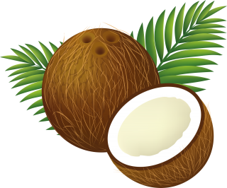 Coconut Tree PNG Clipart PNG images