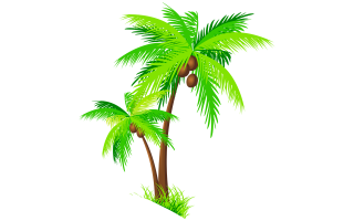 Coconut Tree PNG File PNG images