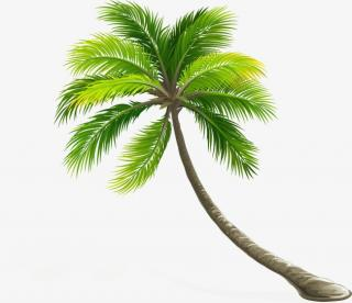 High Resolution Coconut Tree Pattern Png PNG images