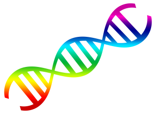 Rainbow Color Dna Pictures PNG images
