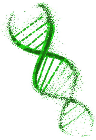 Green And Gorgeous Dna Transparent Photos PNG images