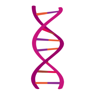 Purple AndDna Designs Photo PNG images