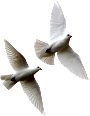 Dove Flying Away Png Image PNG images