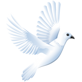 Dove Images Png PNG images