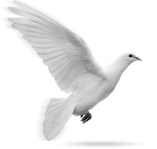 Dove In Flight Png PNG images